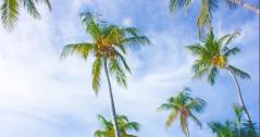 Beach paredise cover 4